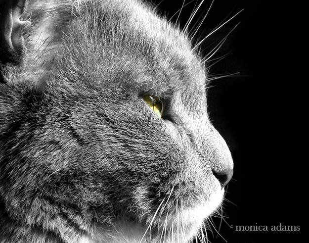 Beware the Gato by Monica Adams Photography